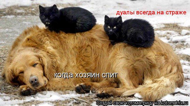 Котоматрица: когда хозяин спит дуалы всегда на страже