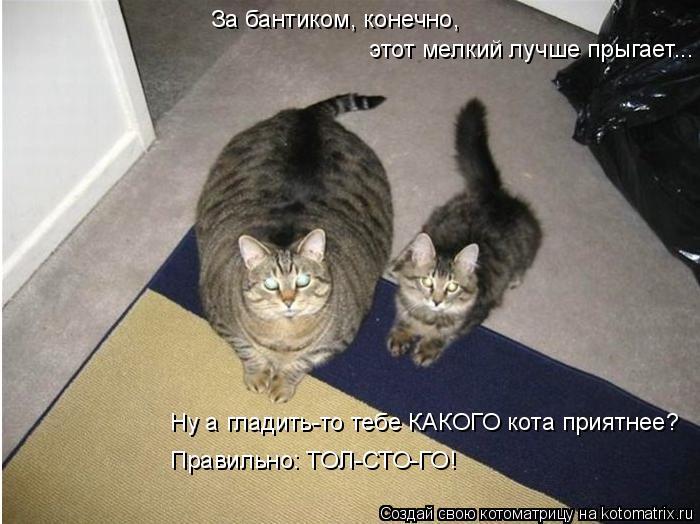 Котоматрица: За бантиком, конечно,  этот мелкий лучше прыгает... Ну а гладить-то тебе КАКОГО кота приятнее? Правильно: ТОЛ-СТО-ГО!