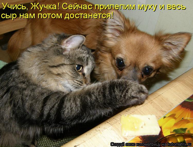 Котоматрица: Учись, Жучка! Сейчас прилепим муху и весь сыр нам потом достанется!