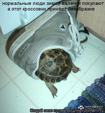Котоматрица: нормальные люди зимой валенки покупают а этот кроссовки принёс...безобразие