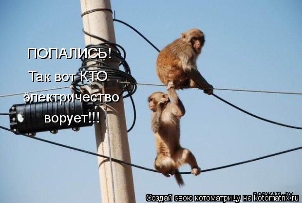 Котоматрица: ПОПАЛИСЬ! Так вот КТО электричество ворует!!!
