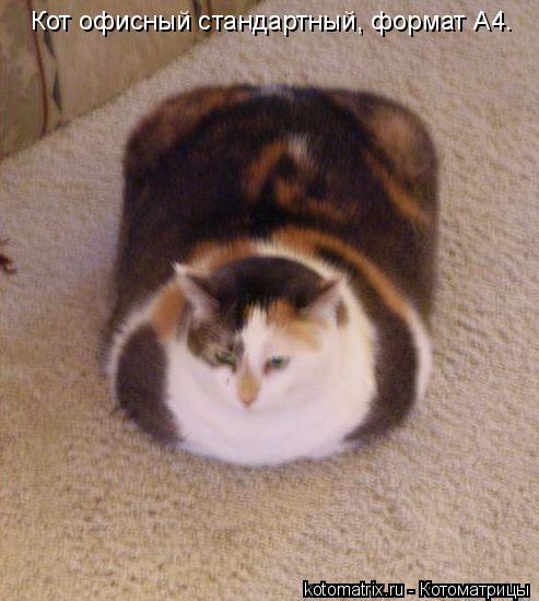 Котоматрица: Кот офисный стандартный, формат А4.