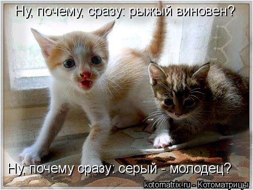 Котоматрица: Ну, почему сразу: серый - молодец? Ну, почему, сразу: рыжый виновен?