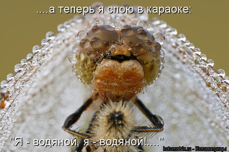 """Котоматрица: ....а теперь я спою в караоке: """"Я - водяной, я - водяной!...."""""""