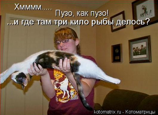 Котоматрица: Хмммм.....  Пузо, как пузо! ...и где там три кило рыбы делось?