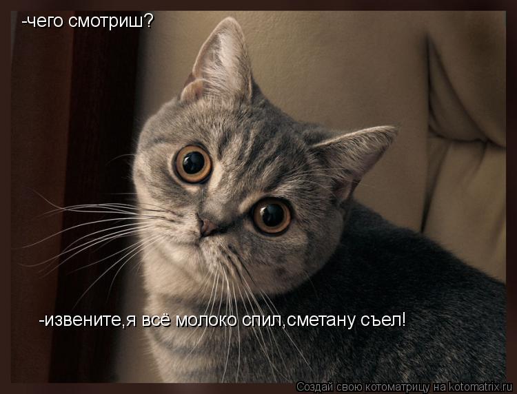 Котоматрица: -чего смотриш? -извените,я всё молоко спил,сметану съел!