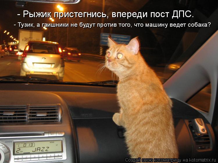 Котоматрица: - Рыжик пристегнись, впереди пост ДПС. - Тузик, а гаишники не будут против того, что машину ведет собака?