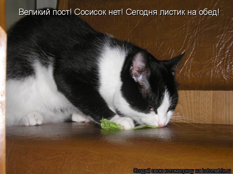 Котоматрица: Великий пост! Сосисок нет! Сегодня листик на обед!