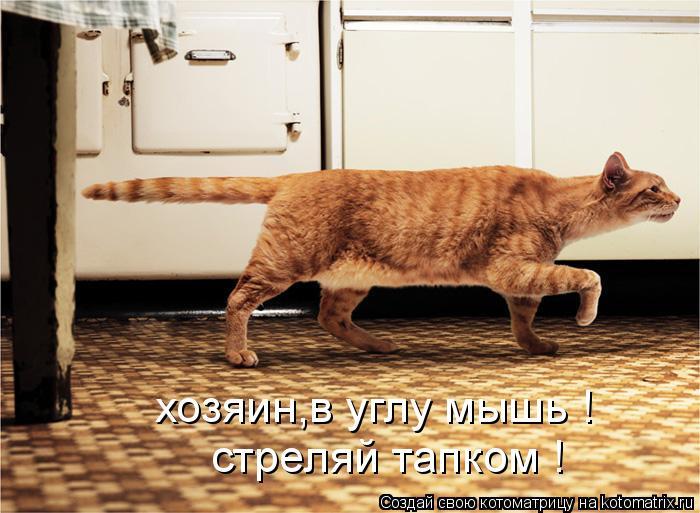 Котоматрица: хозяин,в углу мышь !  стреляй тапком !