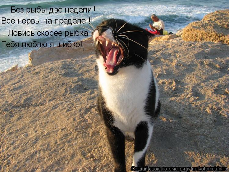 Котоматрица: Без рыбы две недели ! Ловись скорее рыбка Тебя люблю я шибко! Все нервы на пределе!!!