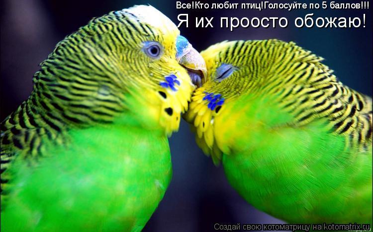 Котоматрица: Все!Кто любит птиц!Голосуйте по 5 баллов!!! Я их проосто обожаю!