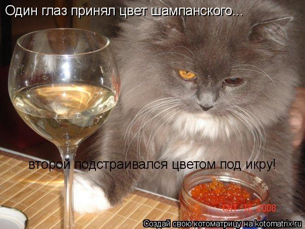 Котоматрица: Один глаз принял цвет шампанского... второй подстраивался цветом под икру!