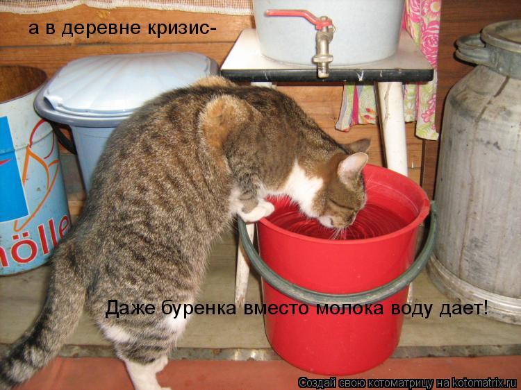 Котоматрица: а в деревне кризис- Даже буренка вместо молока воду дает!