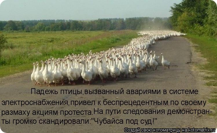 Котоматрица: электроснабжения,привел к беспрецедентным по своему Падежь птицы,вызванный авариями в системе размаху акциям протеста. На пути следовани