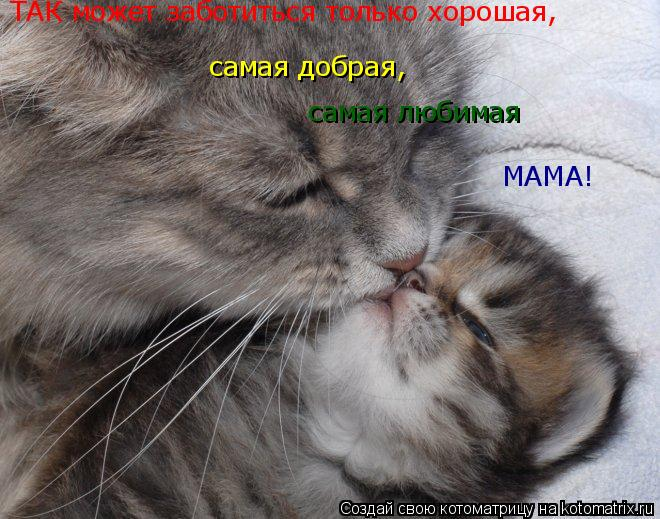 Котоматрица: ТАК может заботиться только хорошая, самая добрая, самая любимая МАМА!