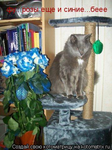 Котоматрица: фу.. розы еще и синие...беее