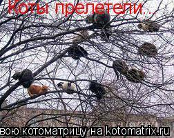 Котоматрица: Коты прелетели...