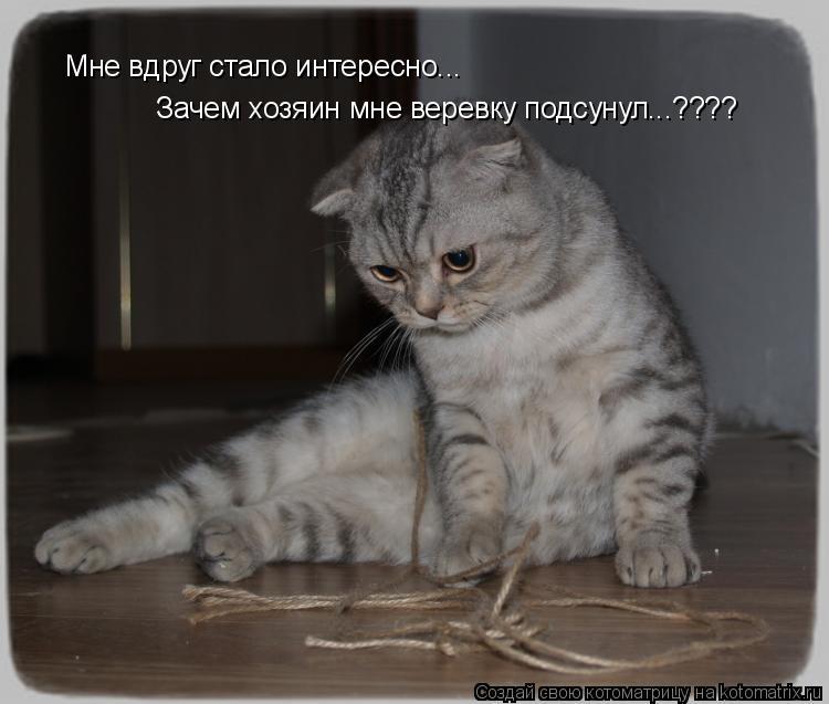 Котоматрица: Зачем хозяин мне веревку подсунул...???? Мне вдруг стало интересно...