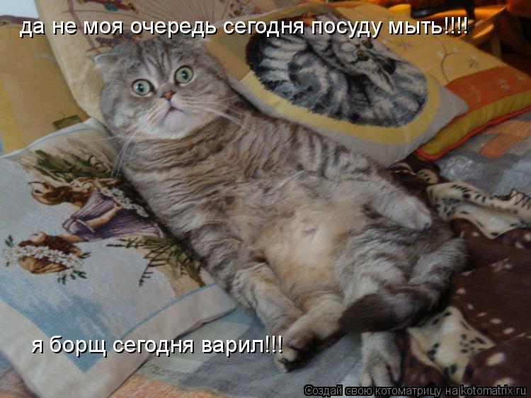 Котоматрица: да не моя очередь сегодня посуду мыть!!!! я борщ сегодня варил!!!