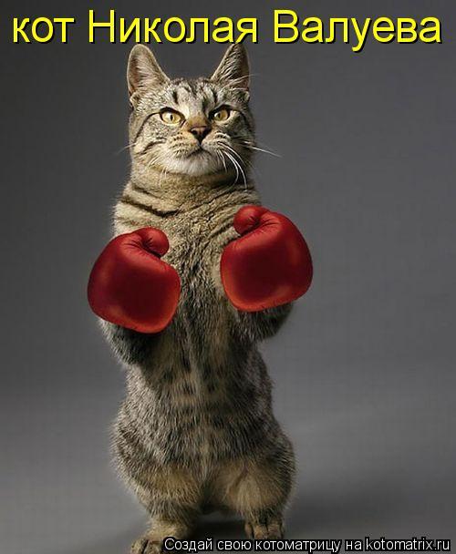 Котоматрица: кот Николая Валуева