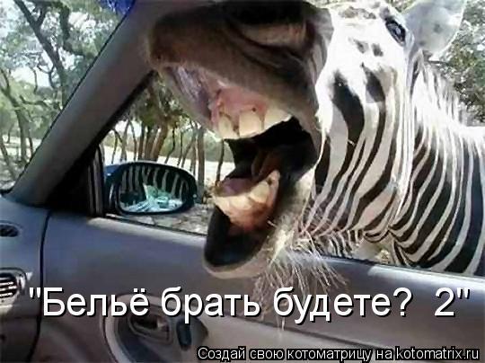 """Котоматрица: """"Бельё брать будете?  2"""""""