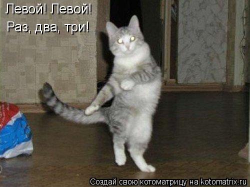 Котоматрица: Левой! Левой! Раз, два, три!