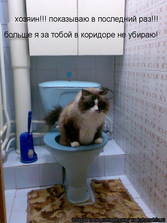 Котоматрица: хозяин!!! показываю в последний раз!!! больше я за тобой в коридоре не убираю!