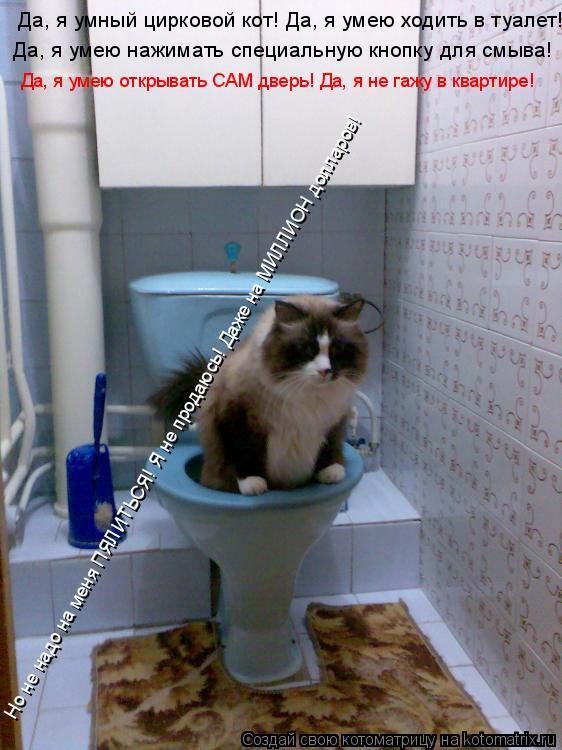Котоматрица: Да, я умею нажимать специальную кнопку для смыва! Да, я умный цирковой кот! Да, я умею ходить в туалет! Да, я умею открывать САМ дверь! Да, я не г
