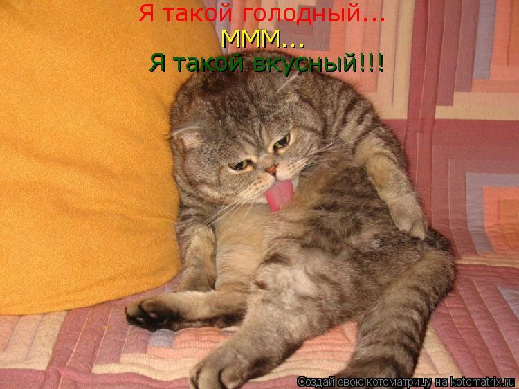 Котоматрица: Я такой голодный... МММ... Я такой вкусный!!!