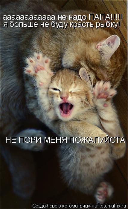 Котоматрица: аааааааааааа не надо ПАПА!!!!! я больше не буду красть рыбку! НЕ ПОРИ МЕНЯ ПОЖАЛУЙСТА