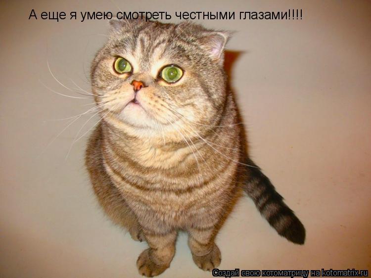 Котоматрица: А еще я умею смотреть честными глазами!!!!