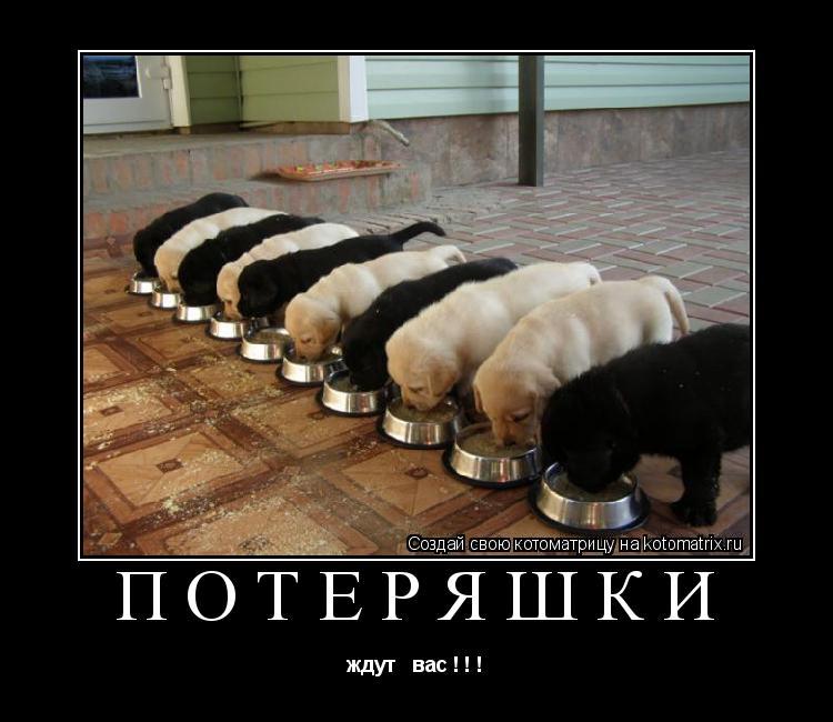 Котоматрица: потеряшки ждут   вас ! ! !