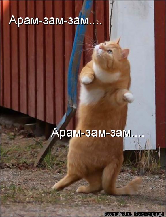 Котоматрица: Арам-зам-зам.... Арам-зам-зам....