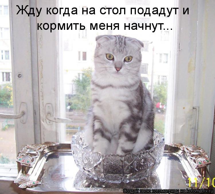 Котоматрица: Жду когда на стол подадут и кормить меня начнут...