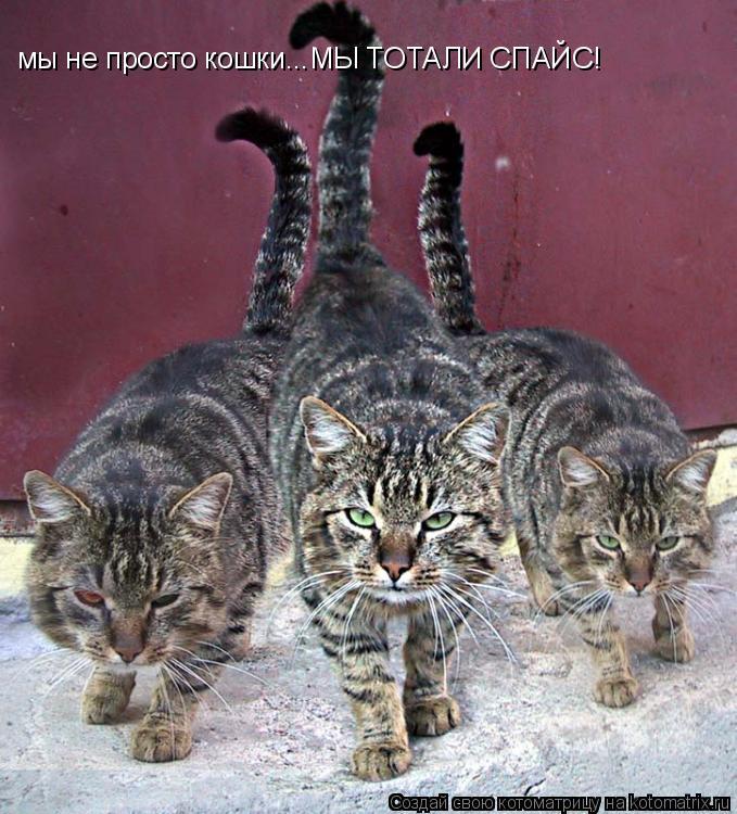 Котоматрица: мы не просто кошки...МЫ ТОТАЛИ СПАЙС!