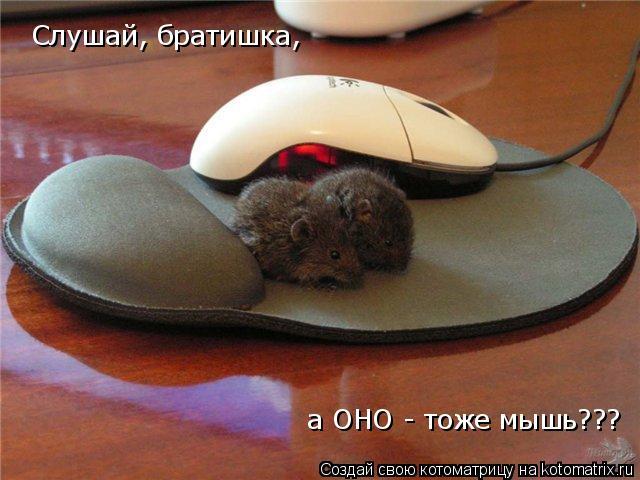 Котоматрица: Слушай, братишка, а ОНО - тоже мышь???