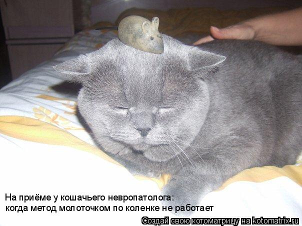 Котоматрица: когда метод молоточком по коленке не работает На приёме у кошачьего невропатолога:
