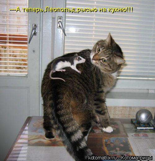 Котоматрица: ---А теперь,Леопольд,рысью на кухню!!!