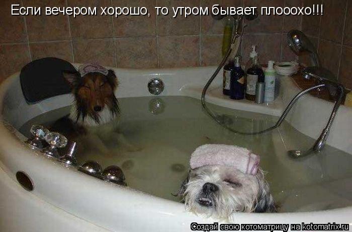 Котоматрица: Если вечером хорошо, то утром бывает плооохо!!!