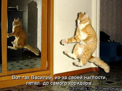Котоматрица: Вот так Василий, из-за своей наглости,  летел  до самого коридора...