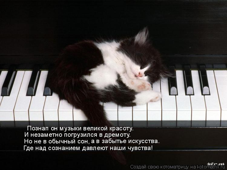 Котоматрица: Познап он музыки великой красоту. И незаметно погрузился в дремоту. Но не в обычный сон, а в забытье искусства. Где над сознанием давлеют наш