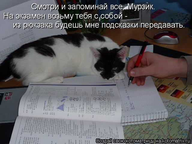Котоматрица: Смотри и запоминай все, Мурзик. На экзамен возьму тебя с собой -  из рюкзака будешь мне подсказки передавать.