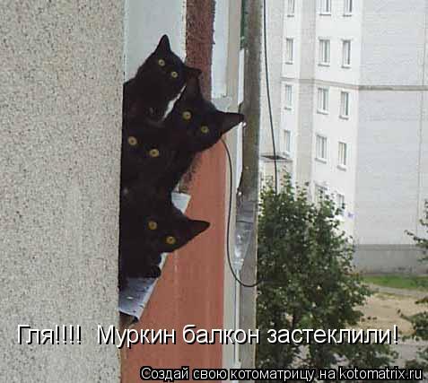 Котоматрица: Гля!!!!  Муркин балкон застеклили!