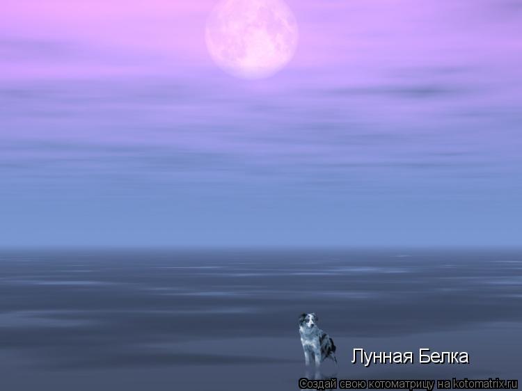Котоматрица: Лунная Белка