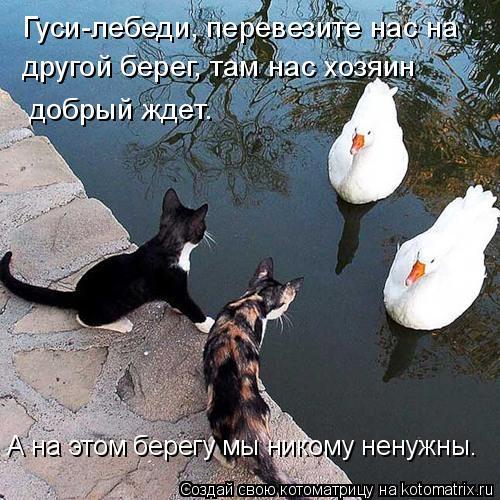 Котоматрица: Гуси-лебеди, перевезите нас на  другой берег, там нас хозяин  добрый ждет. А на этом берегу мы никому ненужны.