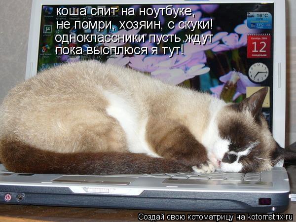 Котоматрица: коша спит на ноутбуке,  не помри, хозяин, с скуки! одноклассники пусть ждут пока высплюся я тут!