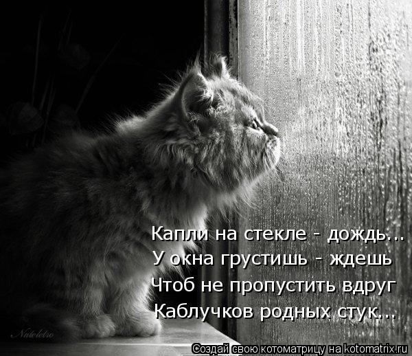 Котоматрица: Капли на стекле - дождь... У окна грустишь - ждешь Чтоб не пропустить вдруг Каблучков родных стук...