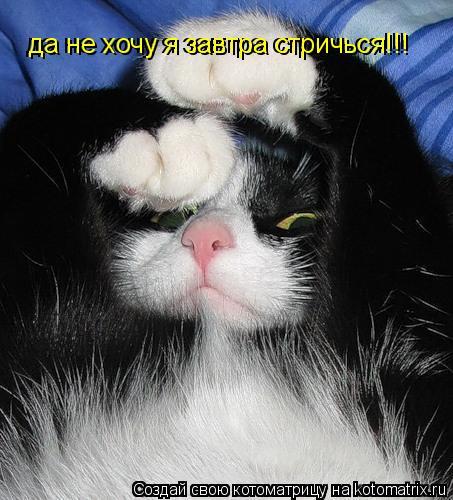 Котоматрица: да не хочу я завтра стричься!!! да не хочу я завтра стричься!!!