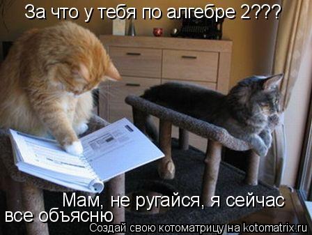 Котоматрица: За что у тебя по алгебре 2??? Мам, не ругайся, я сейчас все объясню
