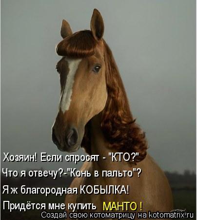 """Котоматрица: Хозяин! Если спросят - """"КТО?"""" Что я отвечу?-""""Конь в пальто""""? Я ж благородная КОБЫЛКА! Придётся мне купить МАНТО !"""